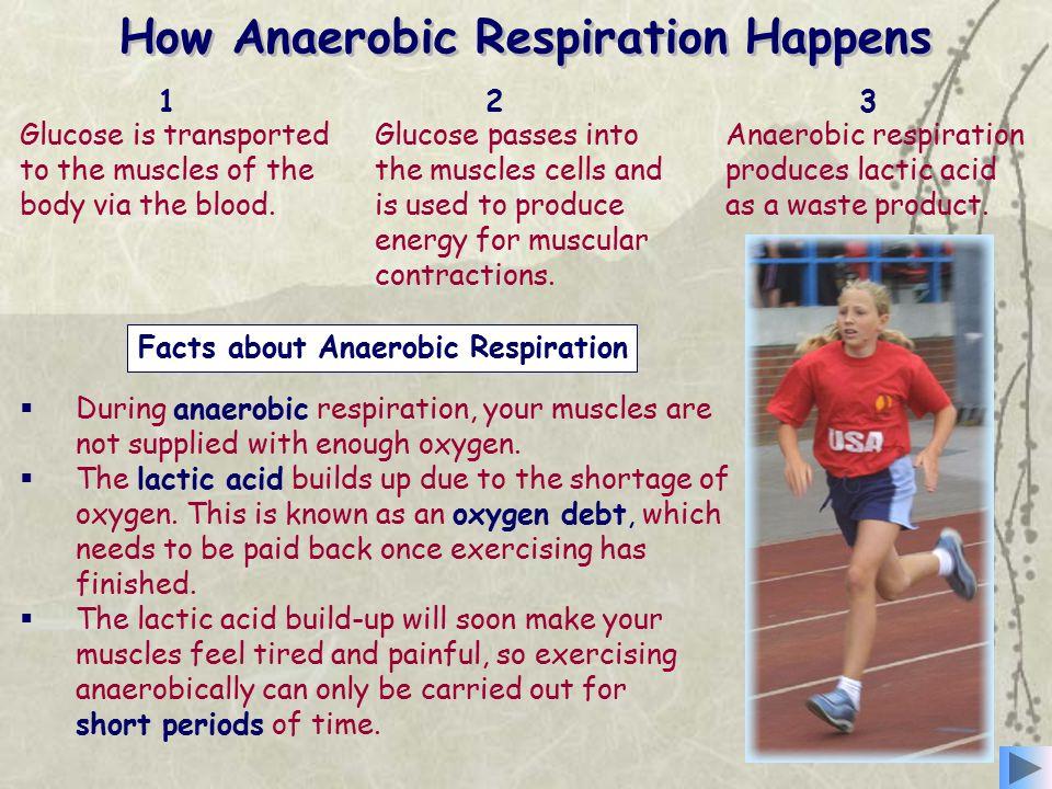 How Anaerobic Respiration Happens