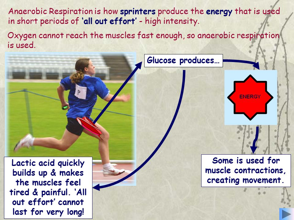 Anaerobic Respiration is how sprinters produce the energy that is used in short periods of 'all out effort' - high intensity.
