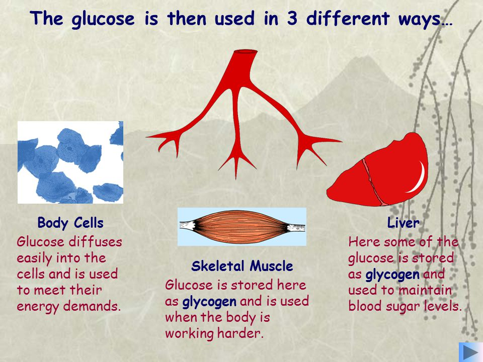The glucose is then used in 3 different ways…