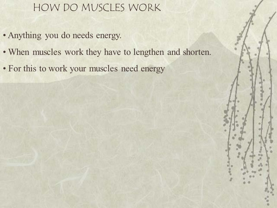 HOW DO MUSCLES WORK Anything you do needs energy.