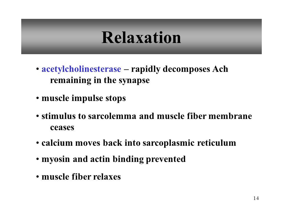 Relaxation acetylcholinesterase – rapidly decomposes Ach