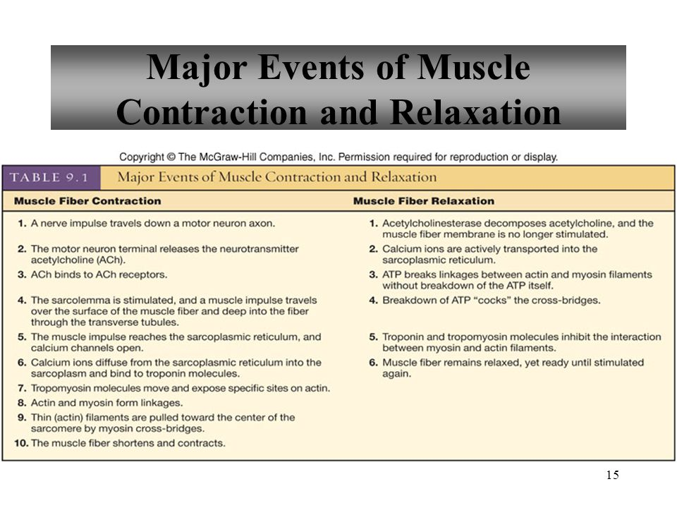 Major Events of Muscle Contraction and Relaxation