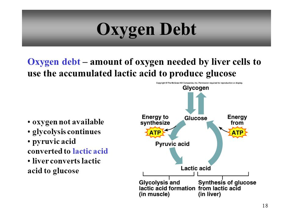 Oxygen Debt Oxygen debt – amount of oxygen needed by liver cells to use the accumulated lactic acid to produce glucose.