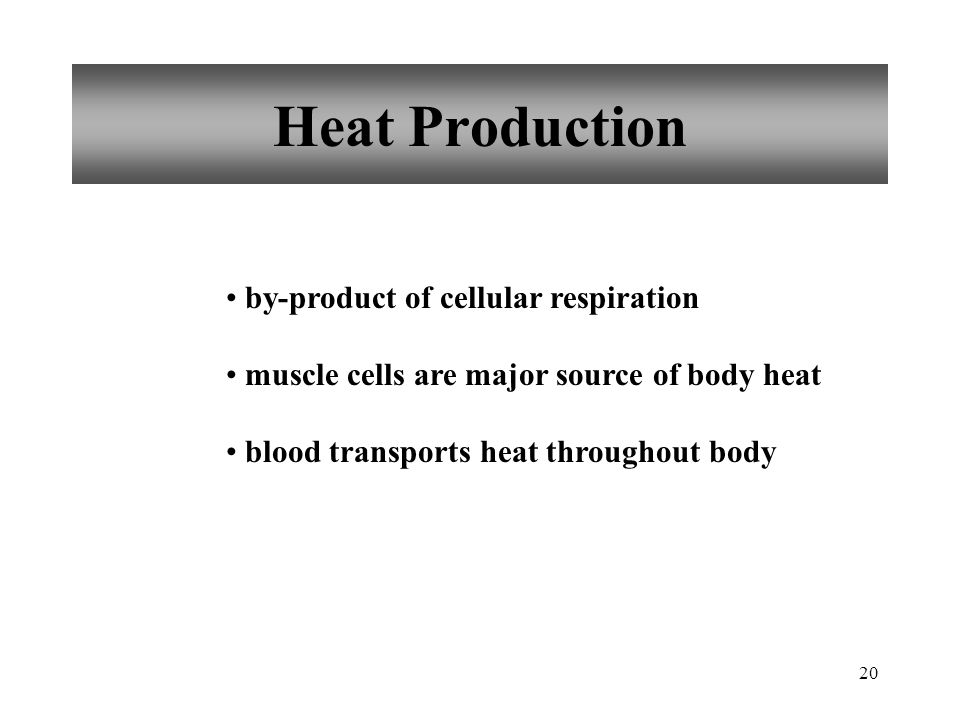 Heat Production by-product of cellular respiration