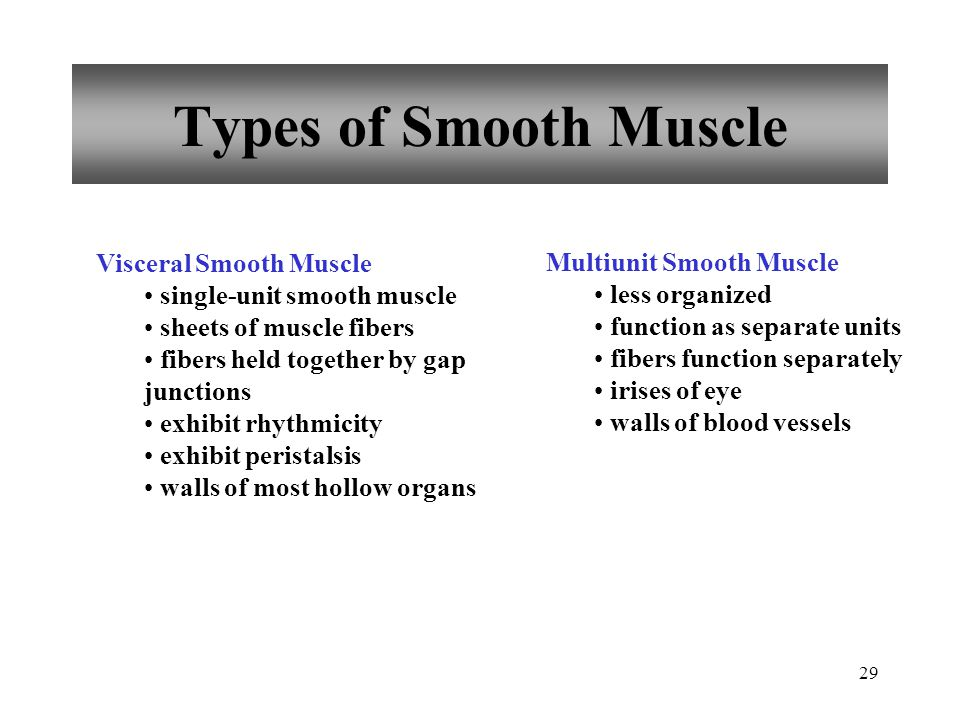 Types of Smooth Muscle Visceral Smooth Muscle Multiunit Smooth Muscle