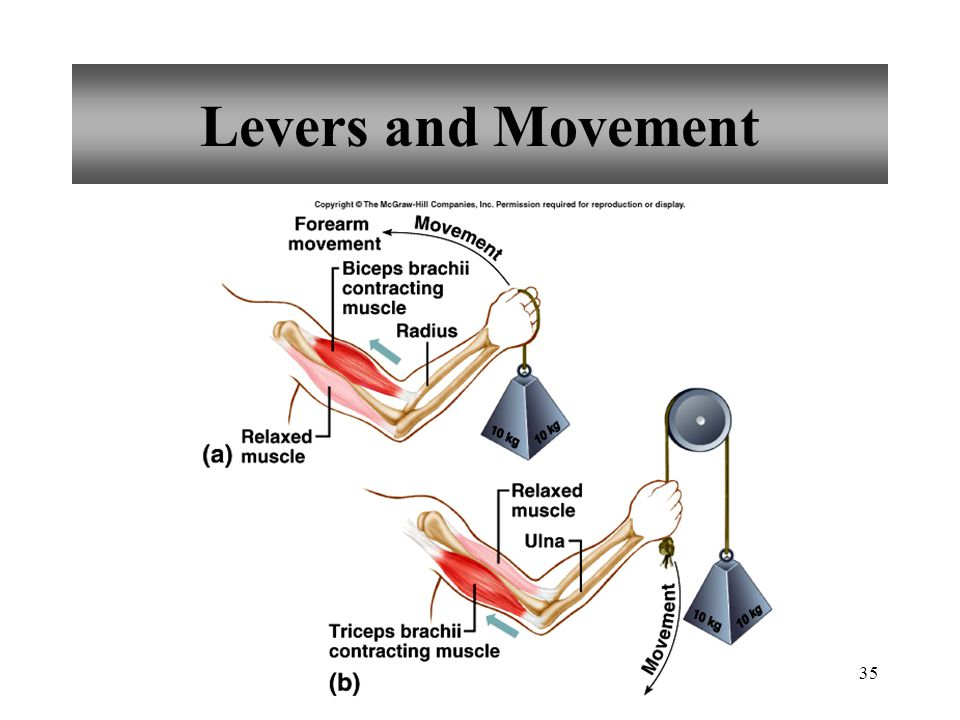 Levers and Movement