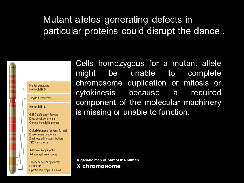 Mutant alleles generating defects in particular proteins could disrupt the dance .