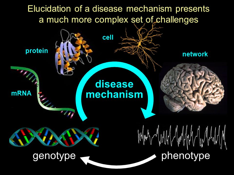 disease mechanism genotype phenotype