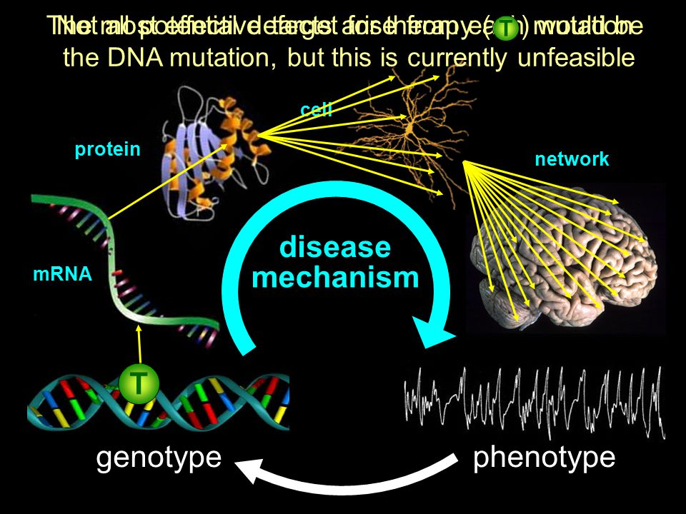 disease mechanism T genotype phenotype
