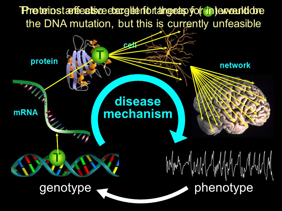 T disease mechanism T genotype phenotype