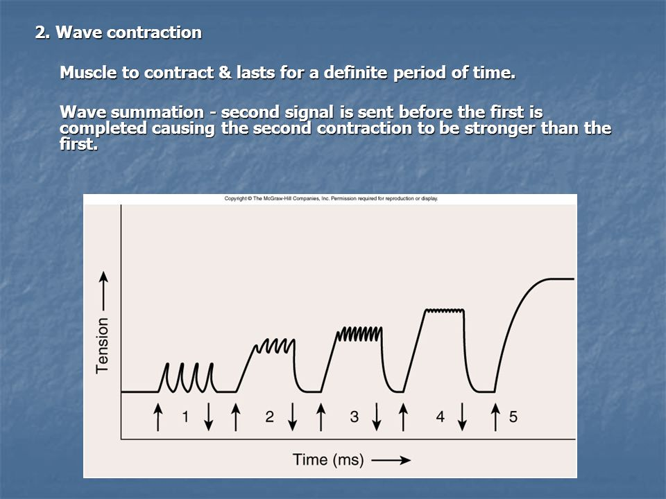 2. Wave contraction Muscle to contract & lasts for a definite period of time.