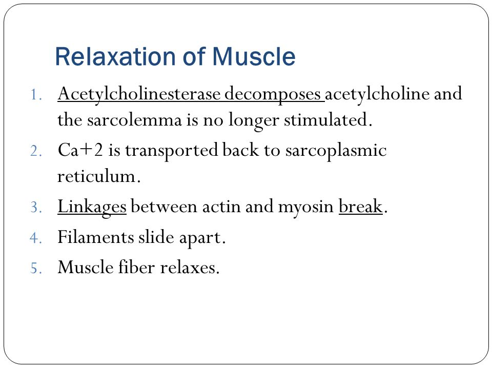 Relaxation of Muscle Acetylcholinesterase decomposes acetylcholine and the sarcolemma is no longer stimulated.