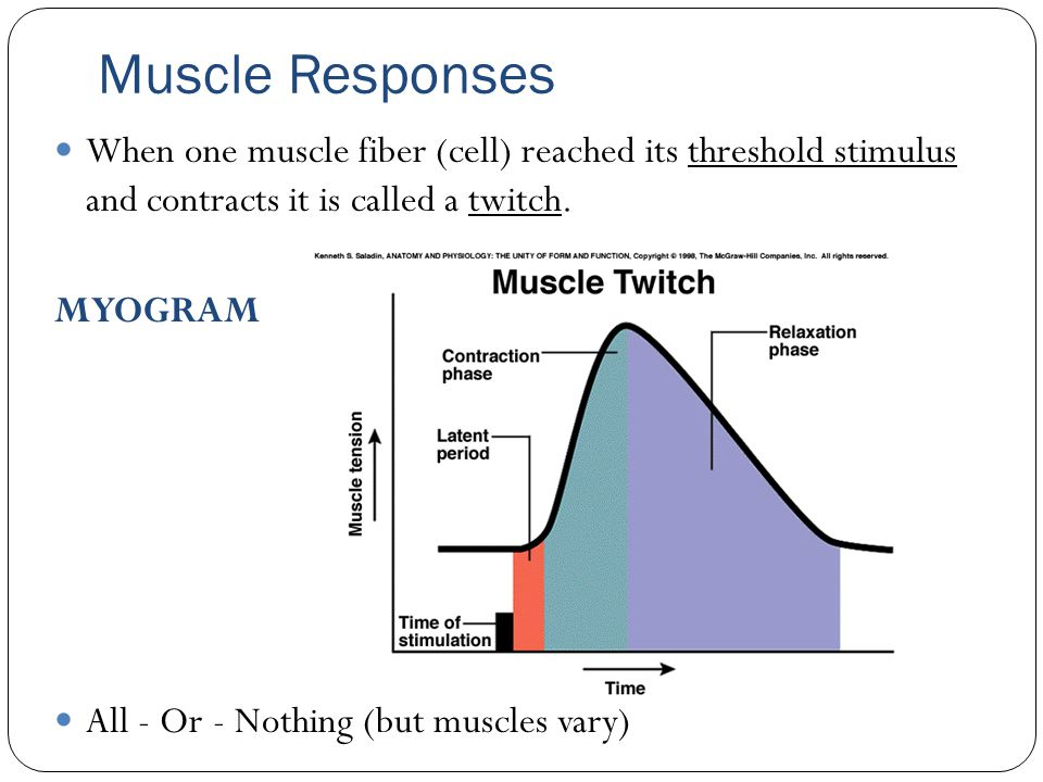 Muscle Responses When one muscle fiber (cell) reached its threshold stimulus and contracts it is called a twitch.