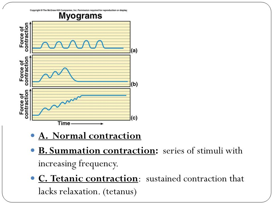 A. Normal contraction B. Summation contraction: series of stimuli with increasing frequency.