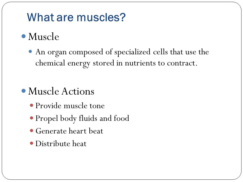 What are muscles Muscle Muscle Actions
