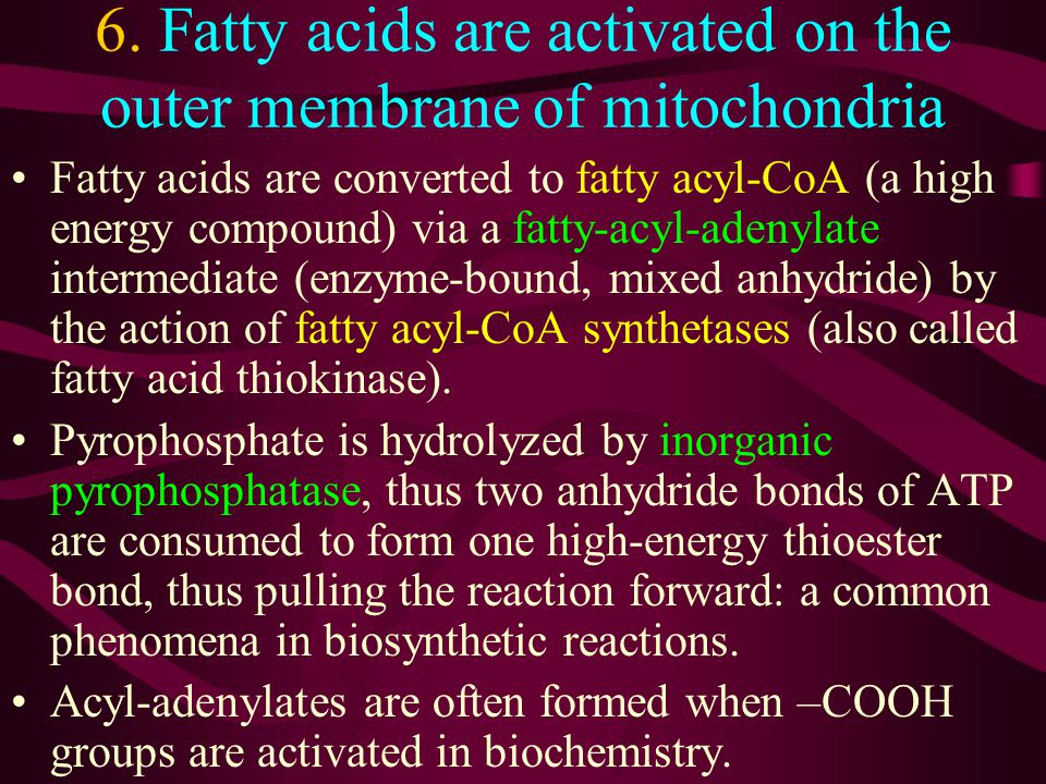 6. Fatty acids are activated on the outer membrane of mitochondria