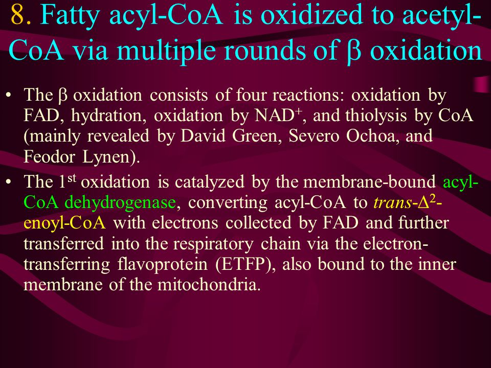 8. Fatty acyl-CoA is oxidized to acetyl-CoA via multiple rounds of b oxidation