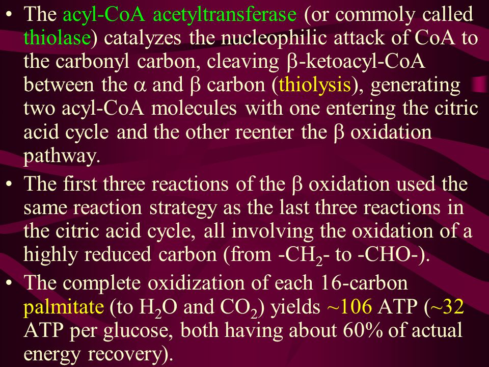 The acyl-CoA acetyltransferase (or commoly called thiolase) catalyzes the nucleophilic attack of CoA to the carbonyl carbon, cleaving b-ketoacyl-CoA between the a and b carbon (thiolysis), generating two acyl-CoA molecules with one entering the citric acid cycle and the other reenter the b oxidation pathway.