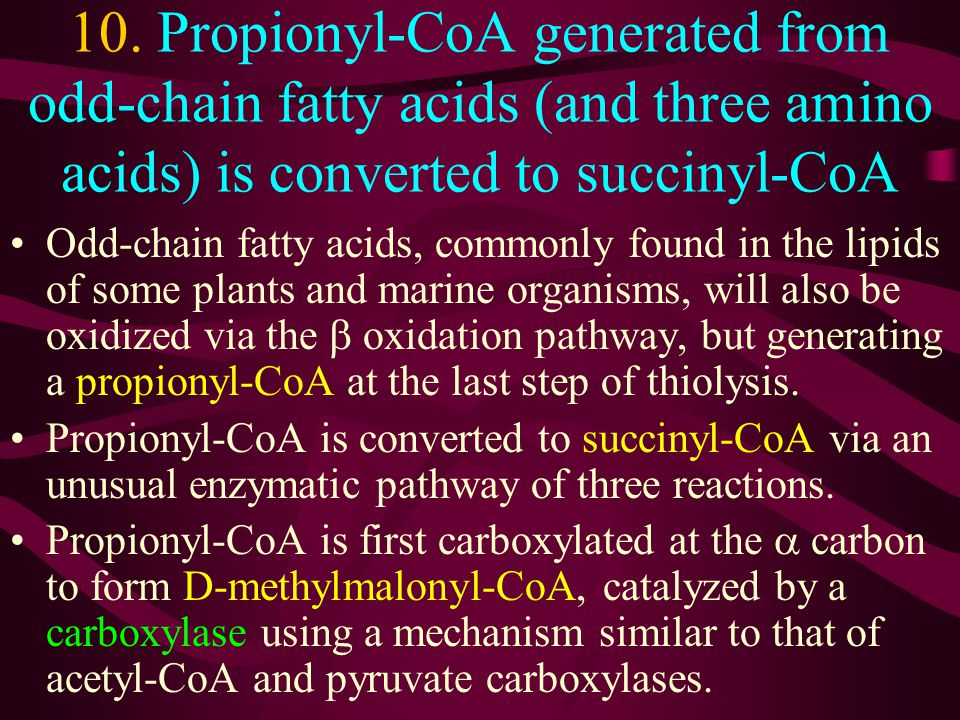 10. Propionyl-CoA generated from odd-chain fatty acids (and three amino acids) is converted to succinyl-CoA