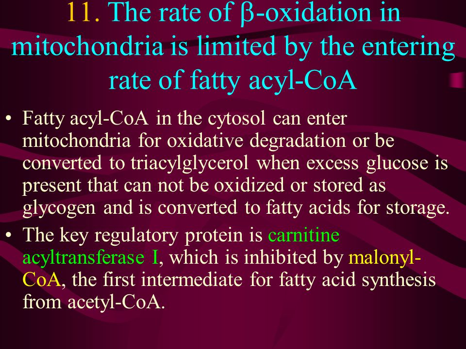 11. The rate of b-oxidation in mitochondria is limited by the entering rate of fatty acyl-CoA