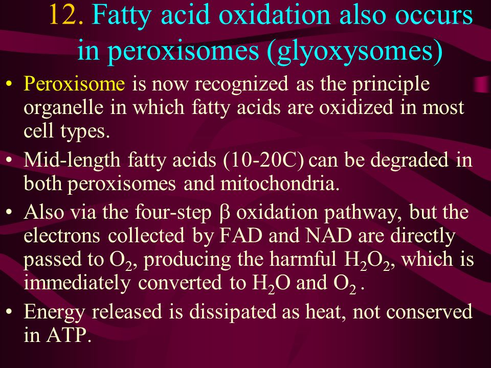 12. Fatty acid oxidation also occurs in peroxisomes (glyoxysomes)
