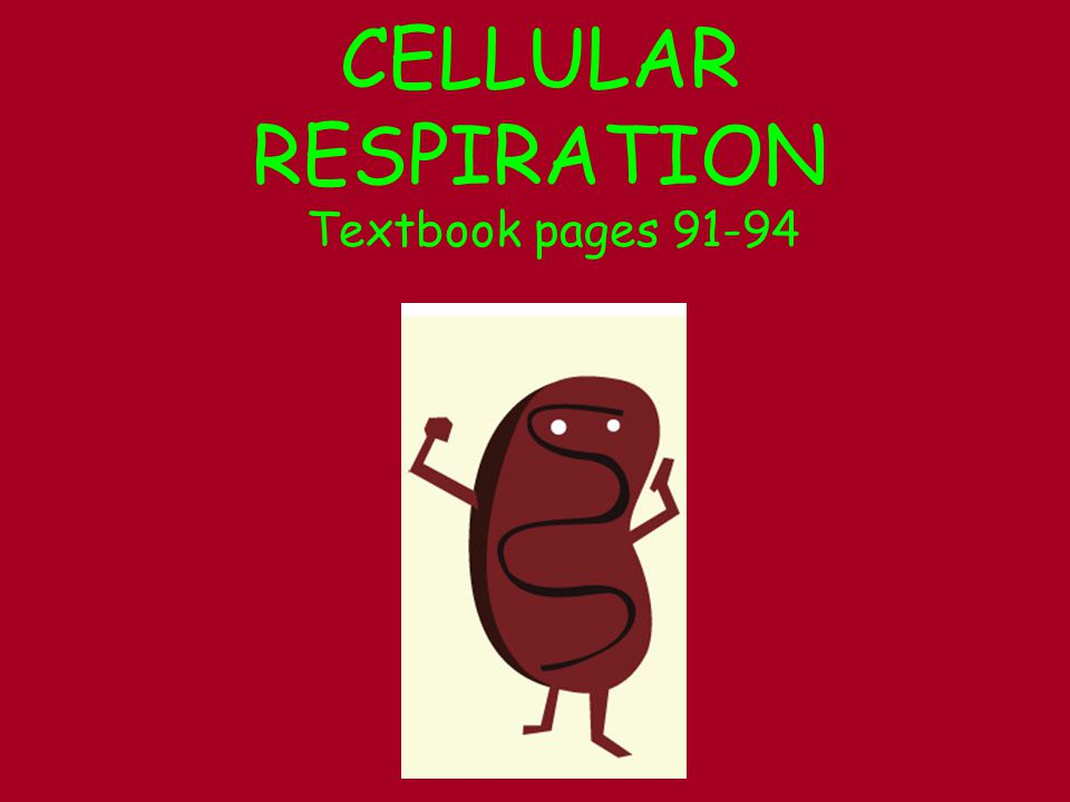 CELLULAR RESPIRATION Textbook pages 91-94