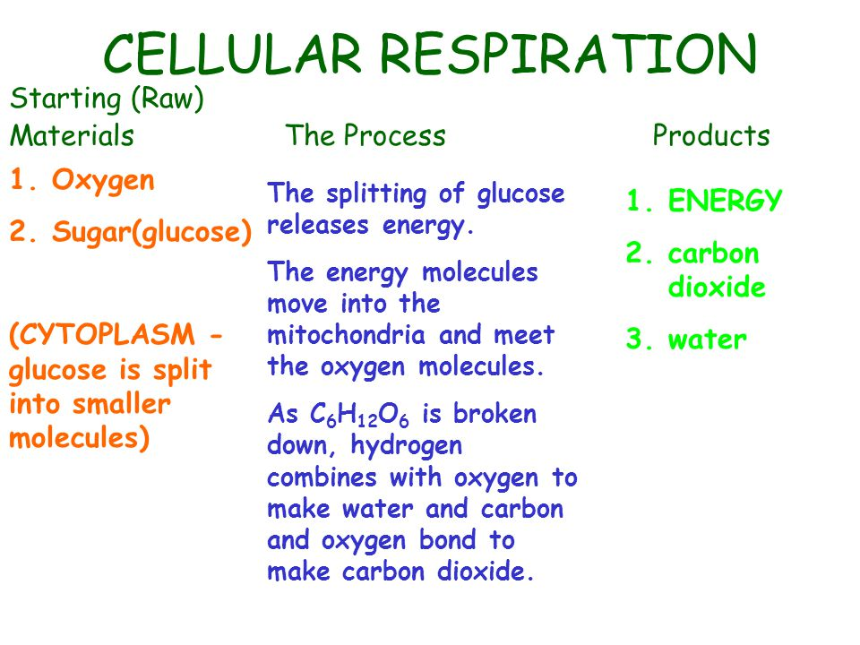 CELLULAR RESPIRATION Starting (Raw) Materials The Process Products