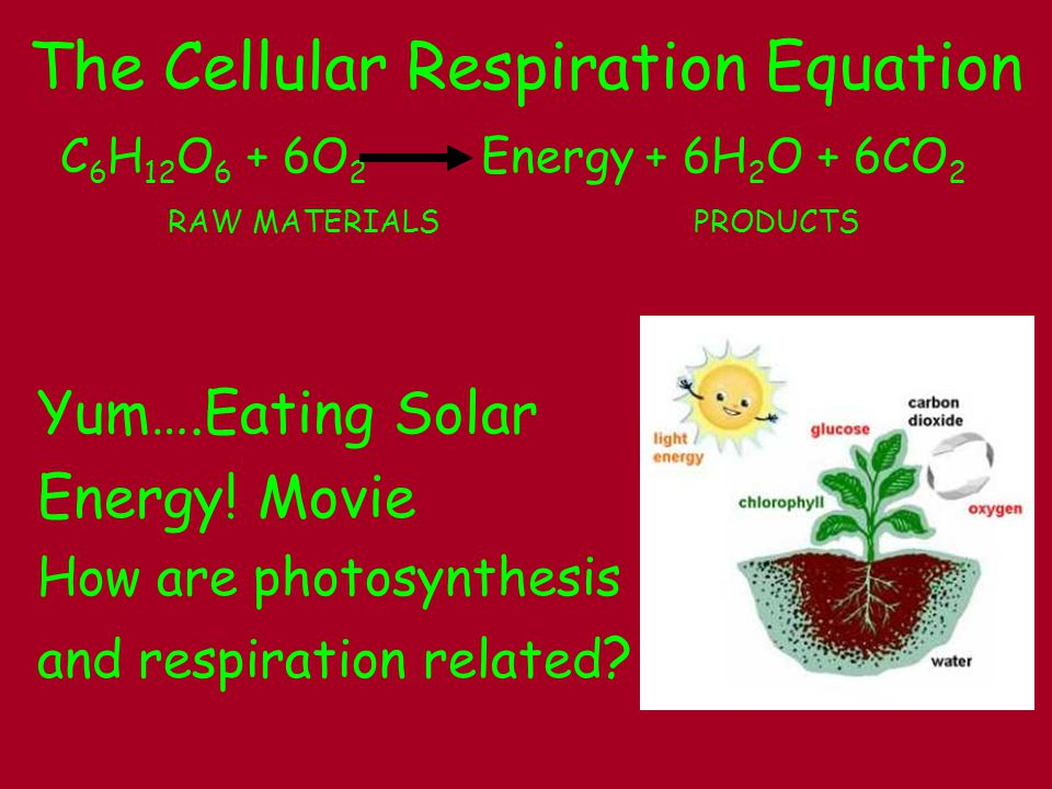 The Cellular Respiration Equation