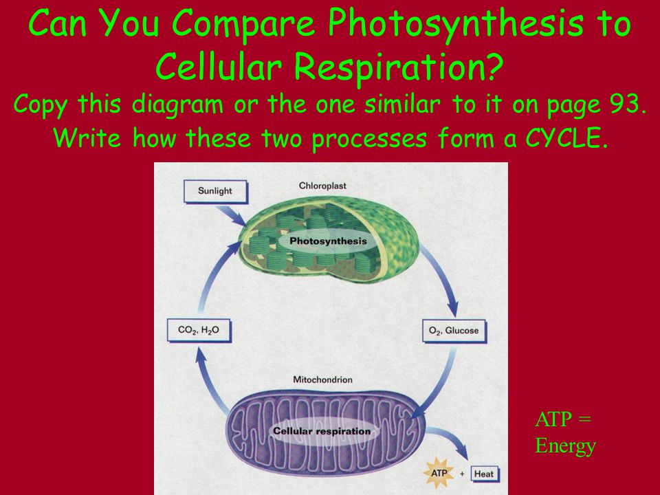 Can You Compare Photosynthesis to Cellular Respiration