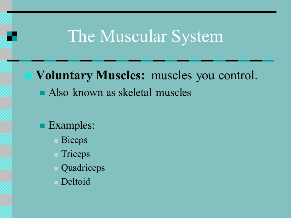 The Muscular System Voluntary Muscles: muscles you control.