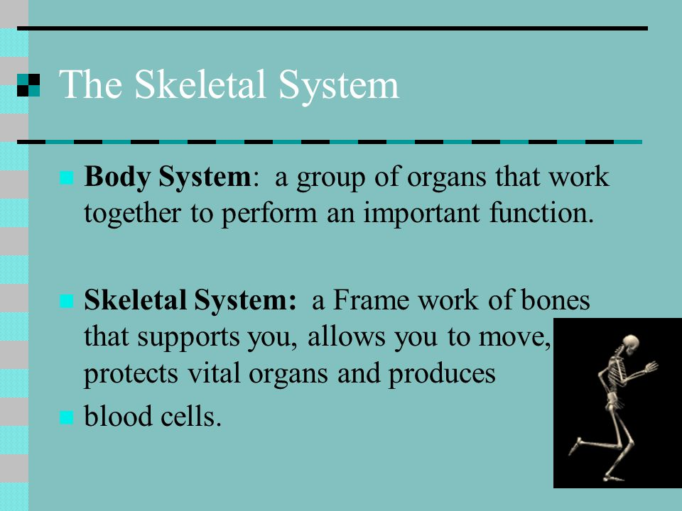 The Skeletal System Body System: a group of organs that work together to perform an important function.
