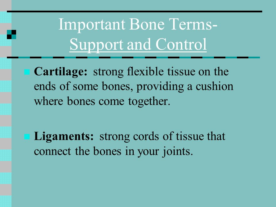 Important Bone Terms- Support and Control