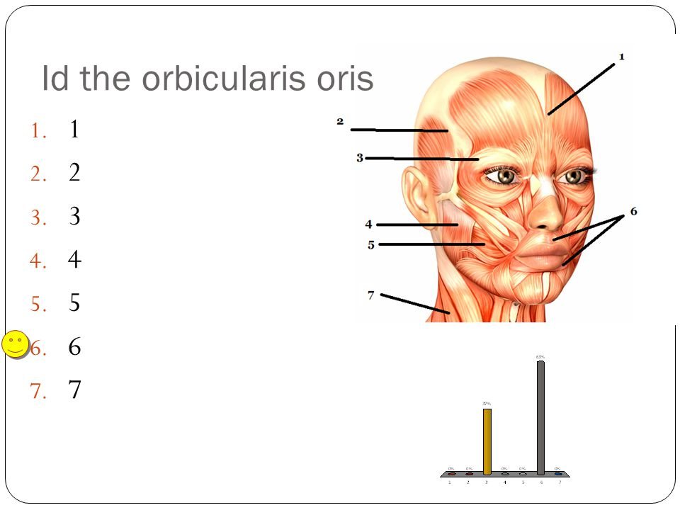 Id the orbicularis oris