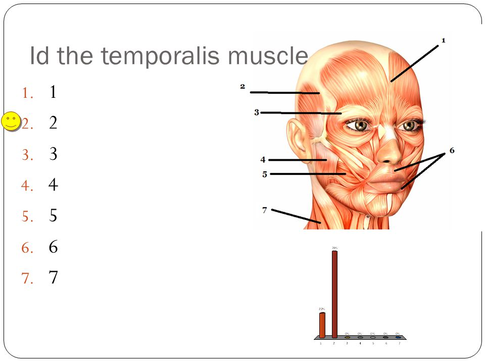 Id the temporalis muscle