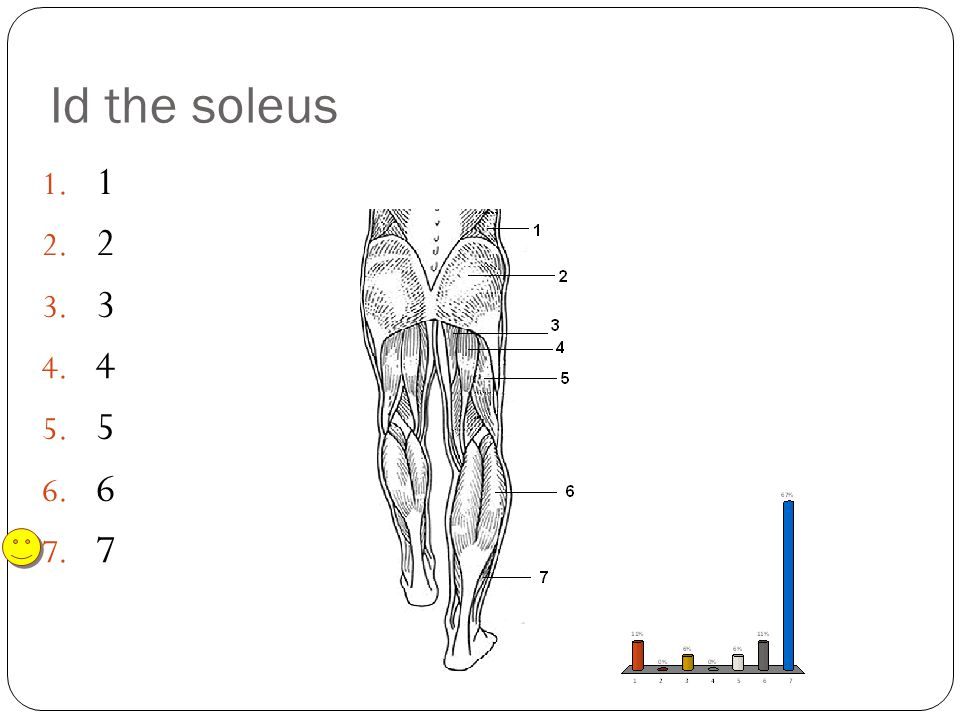 Id the soleus 1 2 3 4 5 6 7
