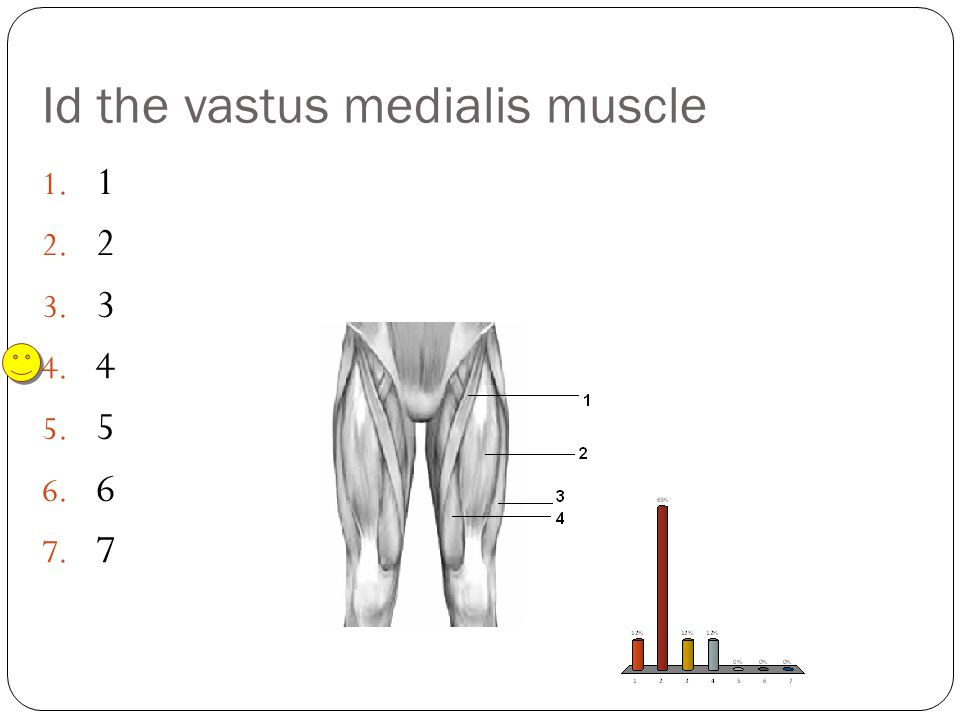 Id the vastus medialis muscle
