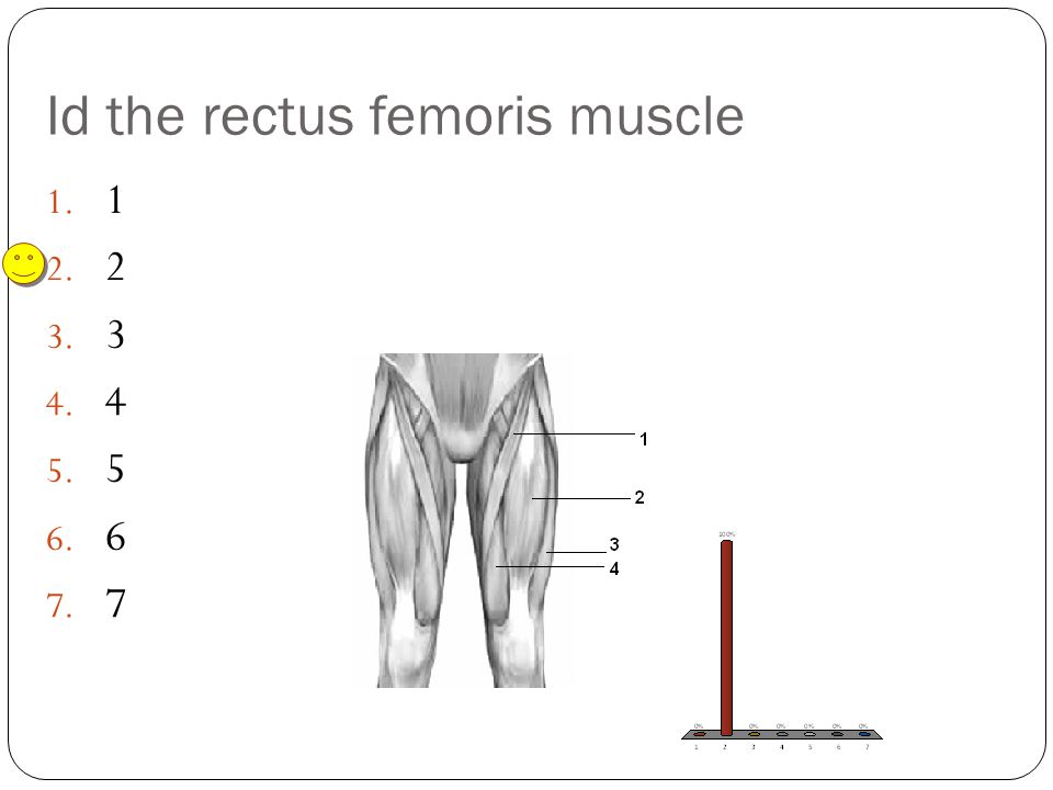 Id the rectus femoris muscle