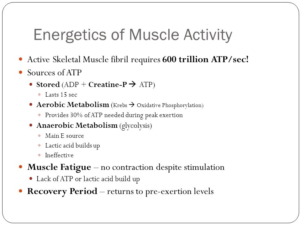 Energetics of Muscle Activity