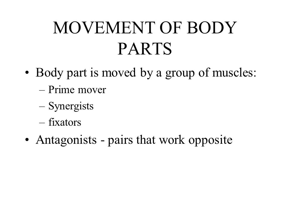 MOVEMENT OF BODY PARTS Body part is moved by a group of muscles: