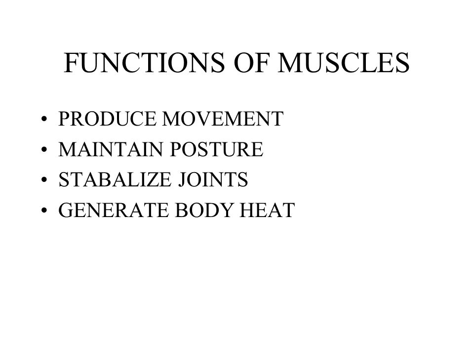 FUNCTIONS OF MUSCLES PRODUCE MOVEMENT MAINTAIN POSTURE