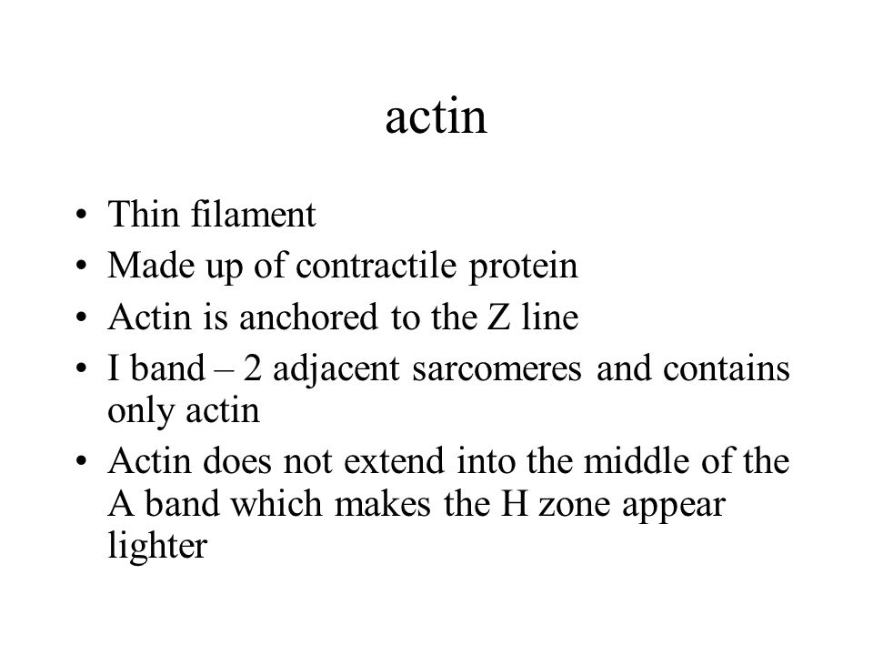 actin Thin filament Made up of contractile protein