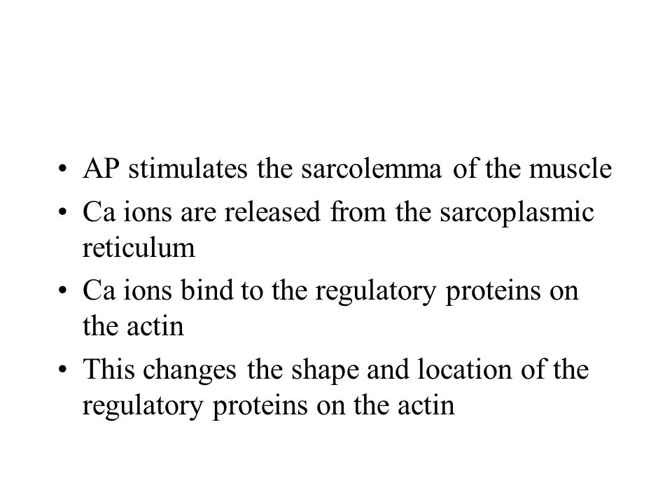 AP stimulates the sarcolemma of the muscle