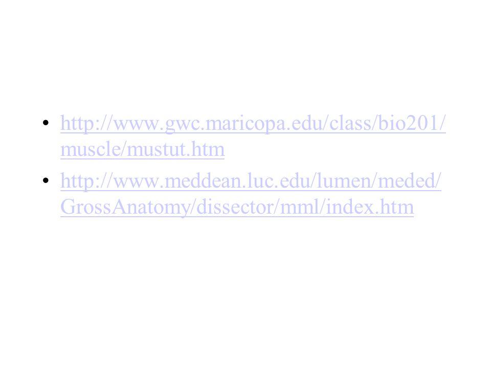 http://www.gwc.maricopa.edu/class/bio201/muscle/mustut.htm http://www.meddean.luc.edu/lumen/meded/GrossAnatomy/dissector/mml/index.htm.