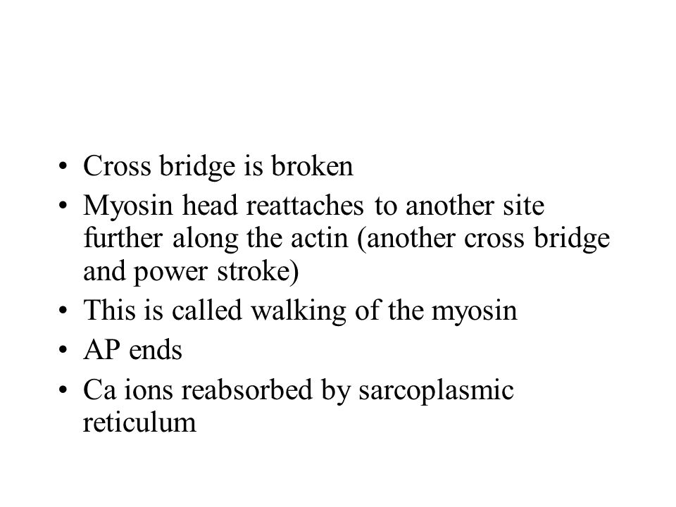 Cross bridge is broken Myosin head reattaches to another site further along the actin (another cross bridge and power stroke)