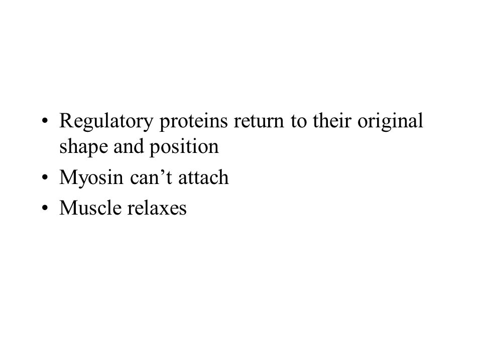 Regulatory proteins return to their original shape and position