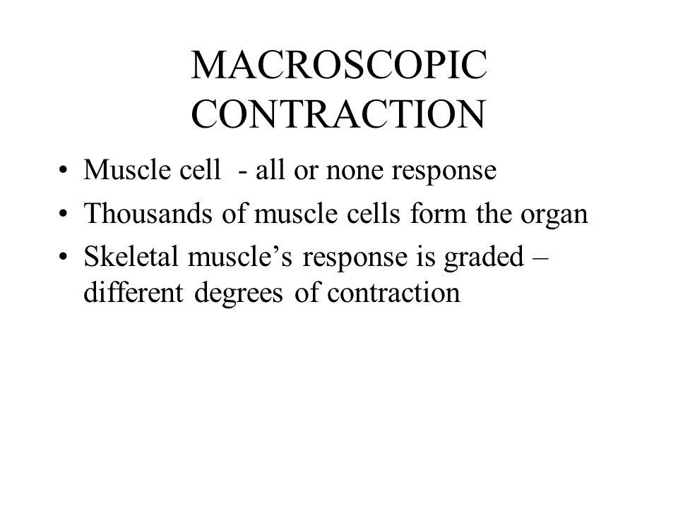 MACROSCOPIC CONTRACTION