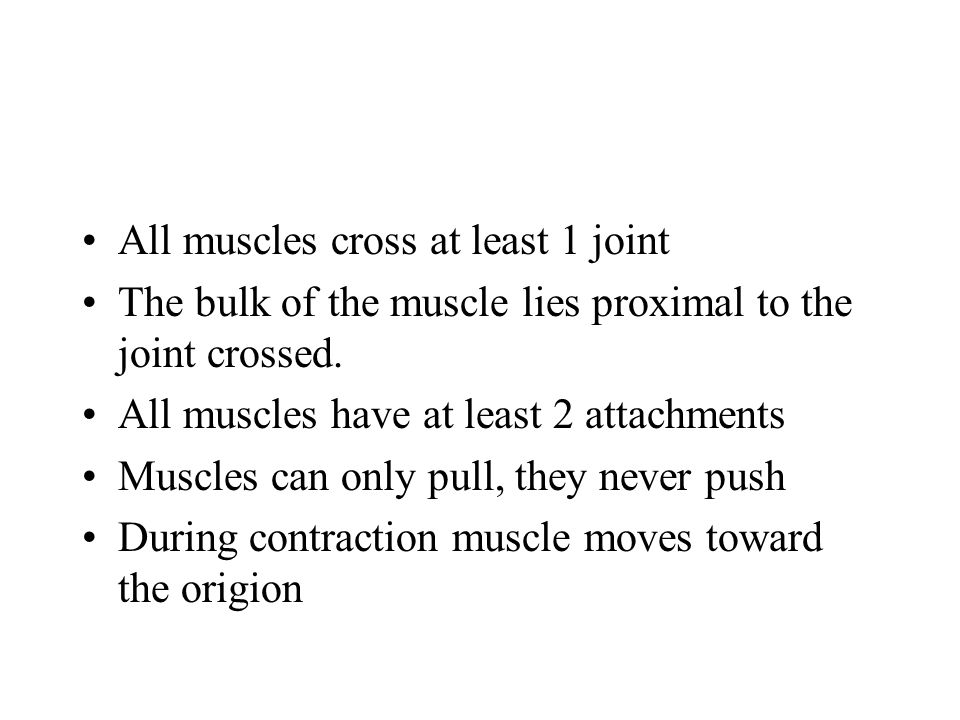 All muscles cross at least 1 joint