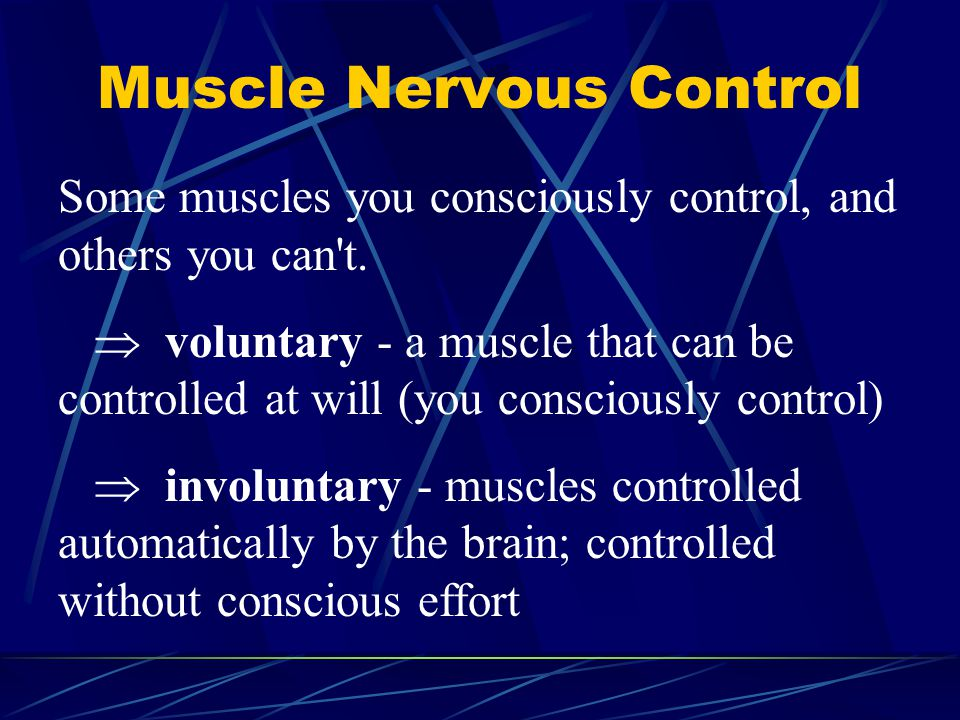 Muscle Nervous Control
