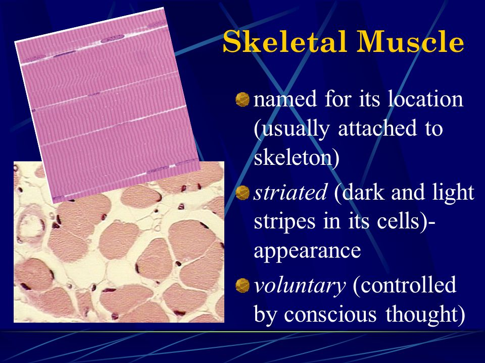 Skeletal Muscle named for its location (usually attached to skeleton)