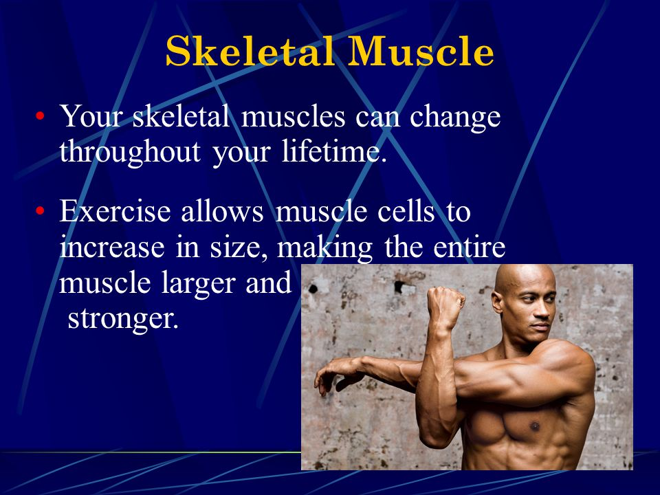 Skeletal Muscle Your skeletal muscles can change throughout your lifetime.